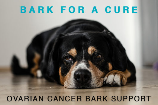 Bark Support